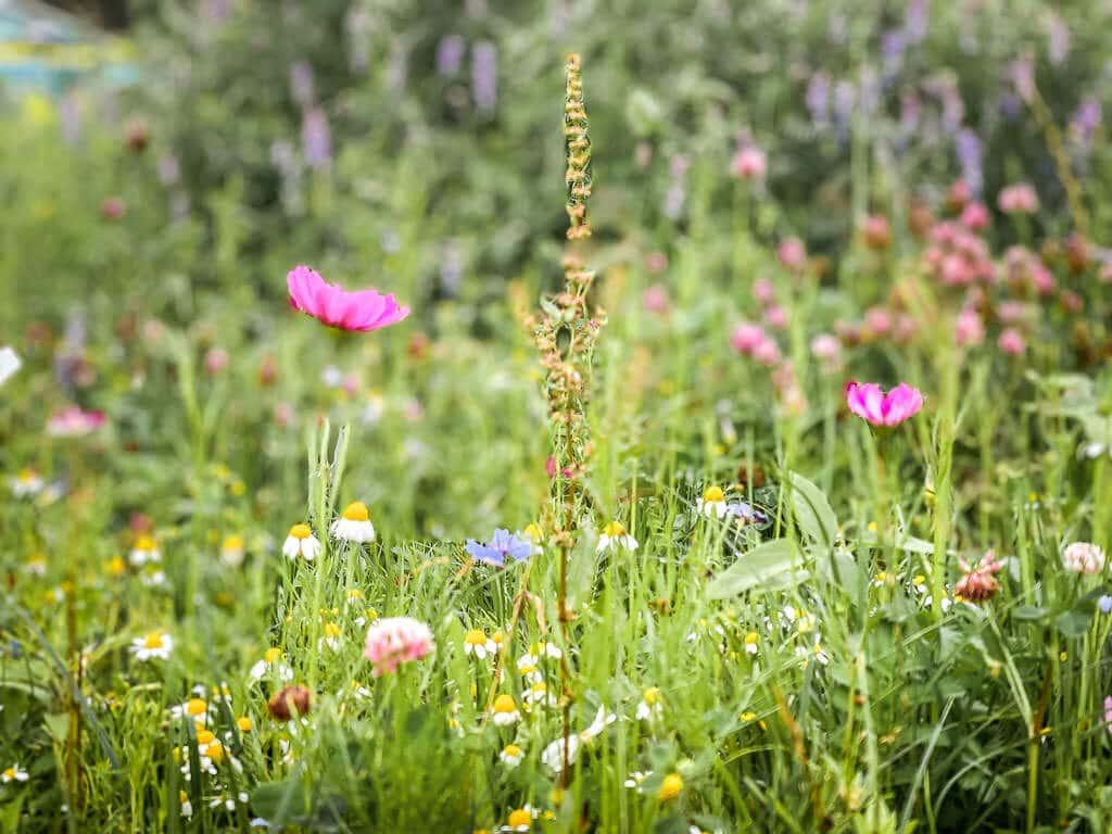 Blumenwiese im Teutoburger Wald bei Oerlinghausen