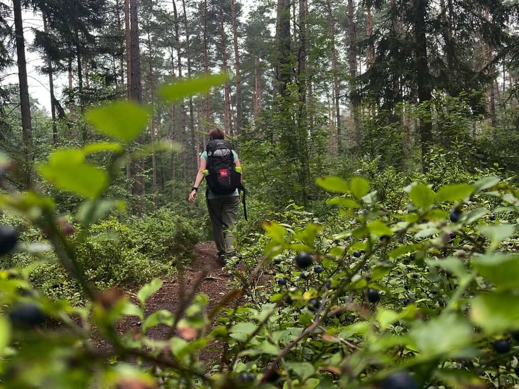 Couchflucht Sabrina Bechtold wandert zwischen Blaubeersträuchern auf den Hermannshöhen im Teutoburger Wald