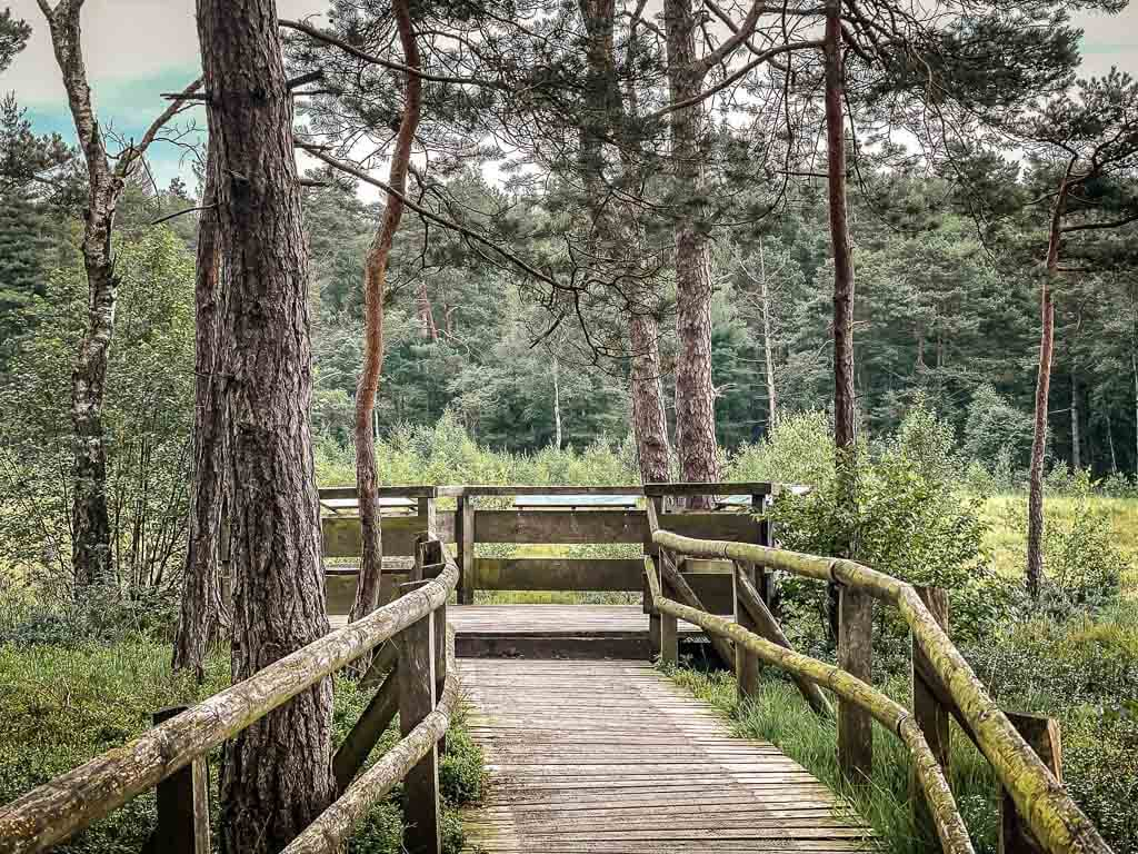 Hermannshöhen Wanderung zur Aussichtsplattform der Hiddeser Bent mit Moorsteg