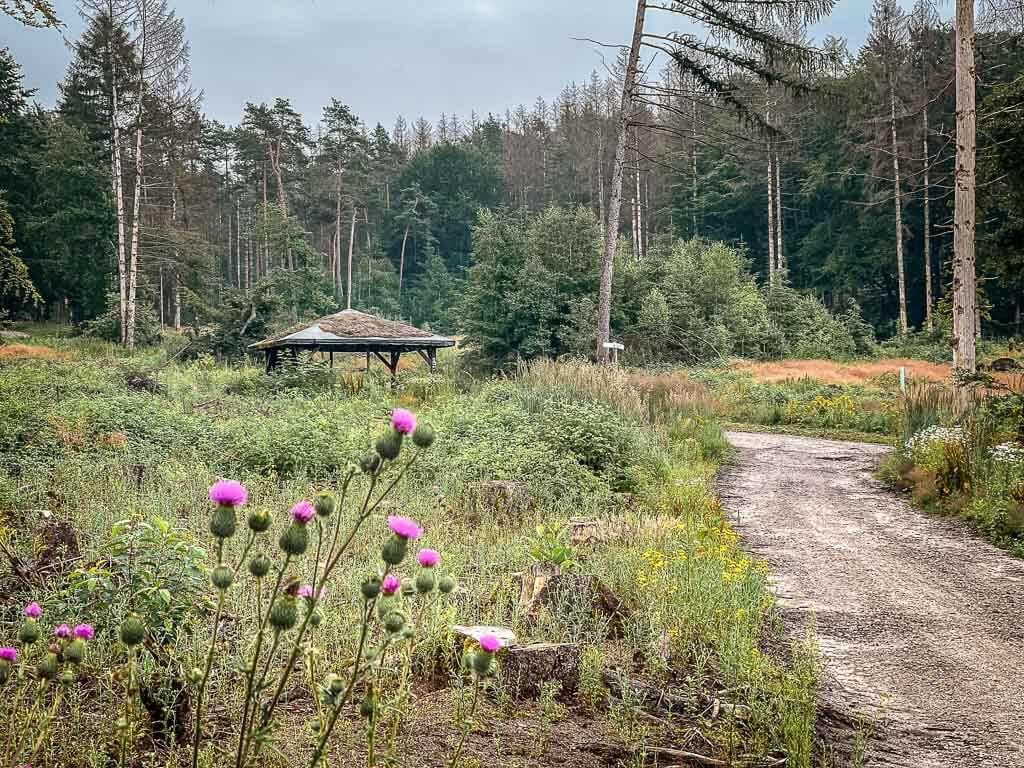 Hermannshöhen im Teutoburger Wald - Wanderweg mit Schutzhütte