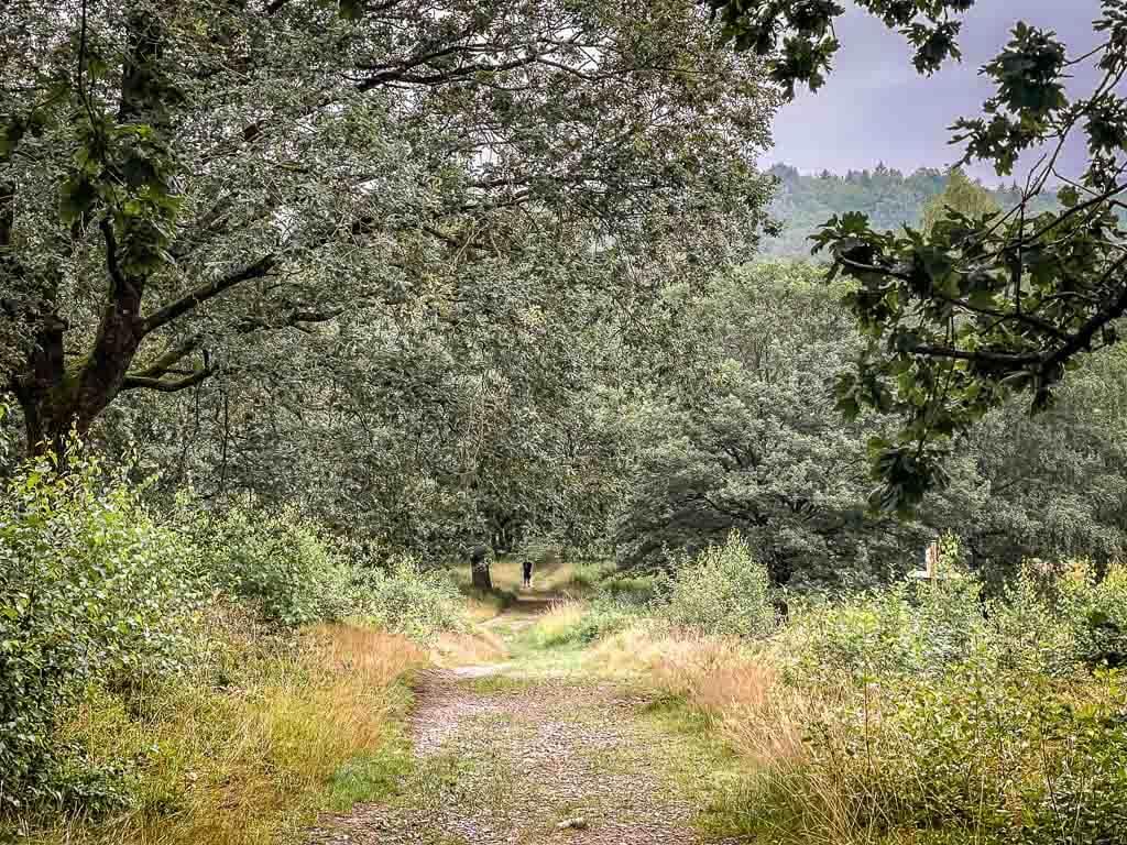Hermannshöhen Wanderweg im Teutoburger Wald an der Vogeltaufe