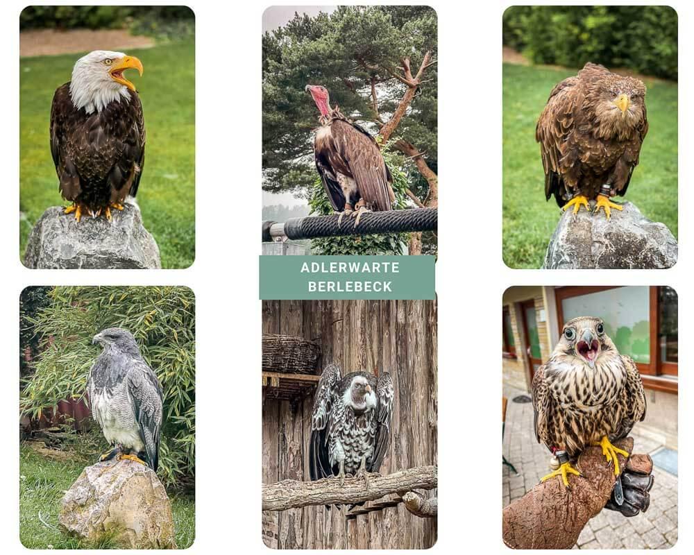 Greifvögel in der Adlerwarte Berlebeck