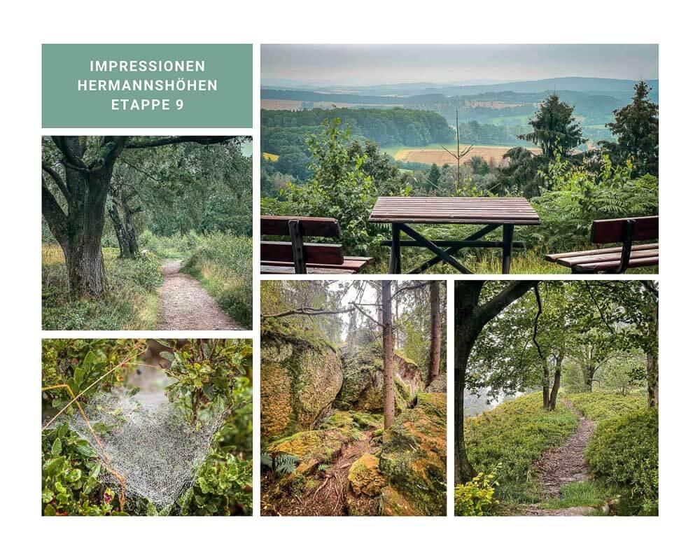 Hermannshöhen Etappe 9 - Wanderwege im Teutoburger Wald