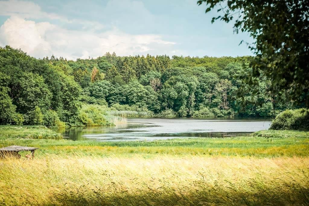 Wandern im Westerwald am Dreifelder Weiher