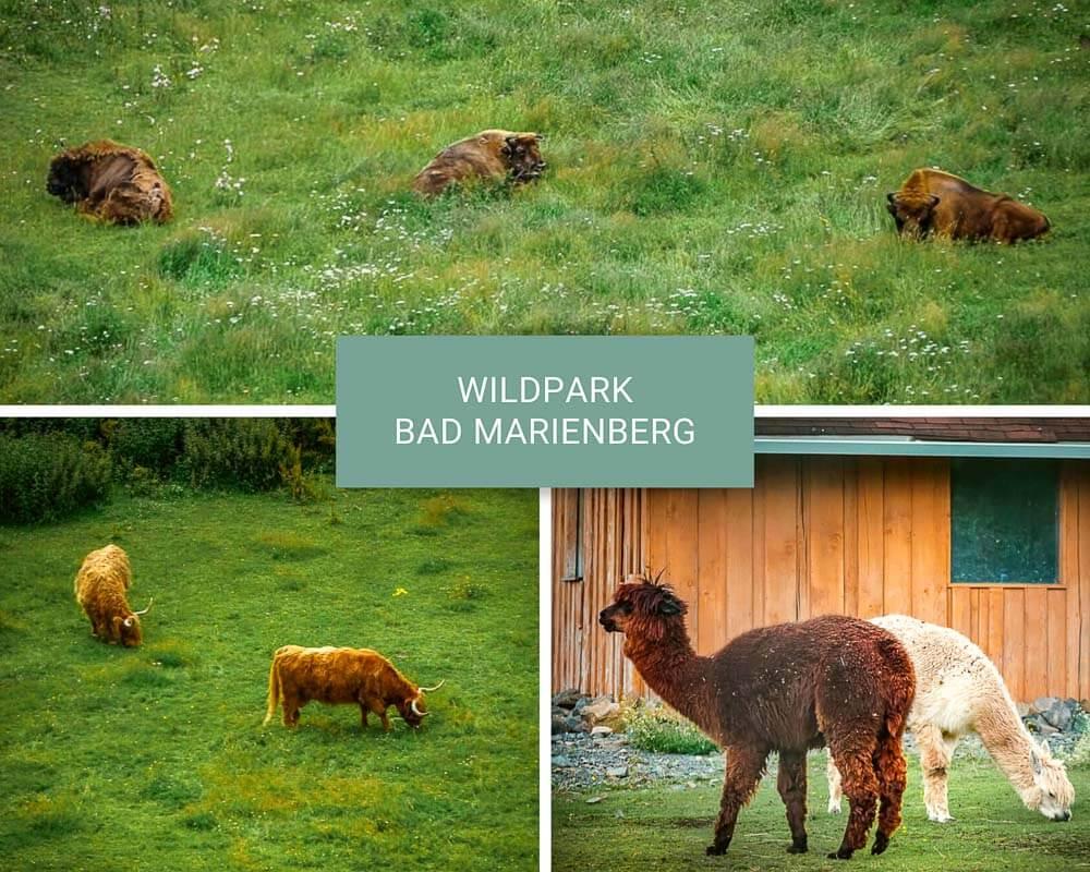 Wandern im Westerwald im Wildpark Bad Marienberg