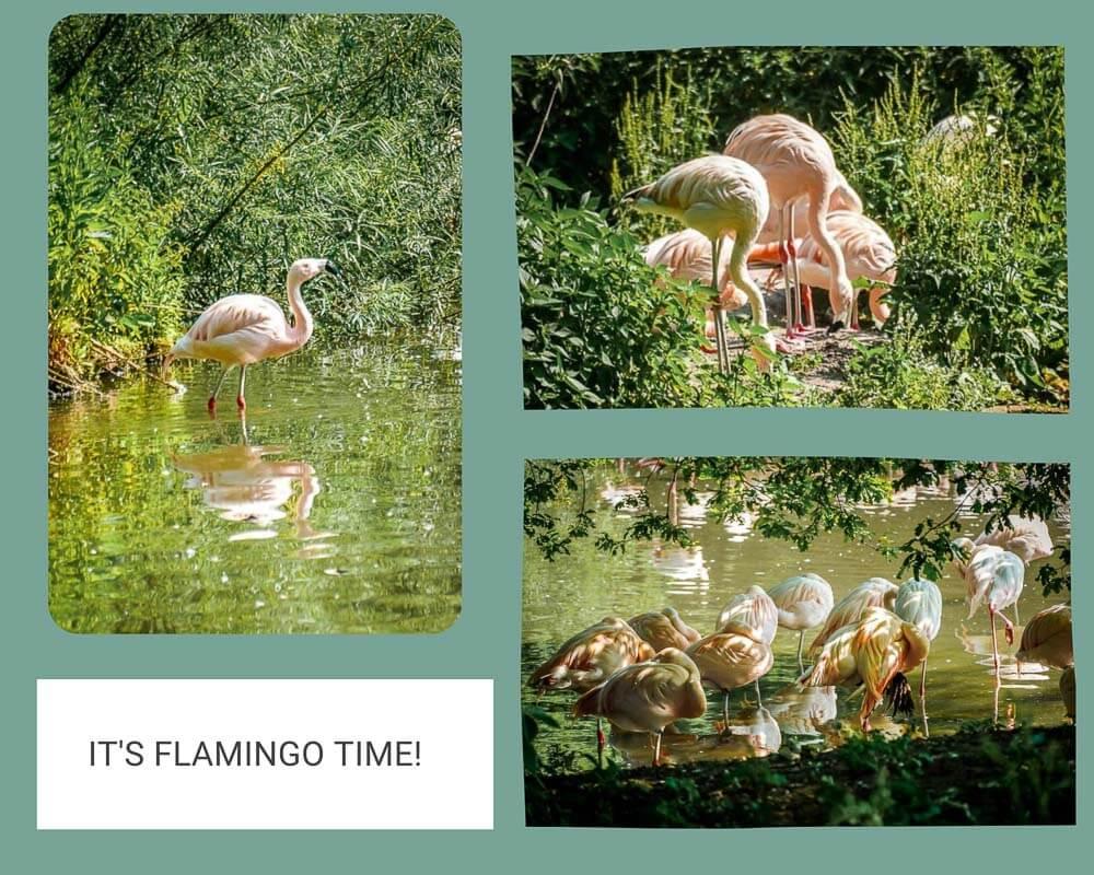 Salzburg Flamingos in der Nähe des Leopoldskroner Weihers