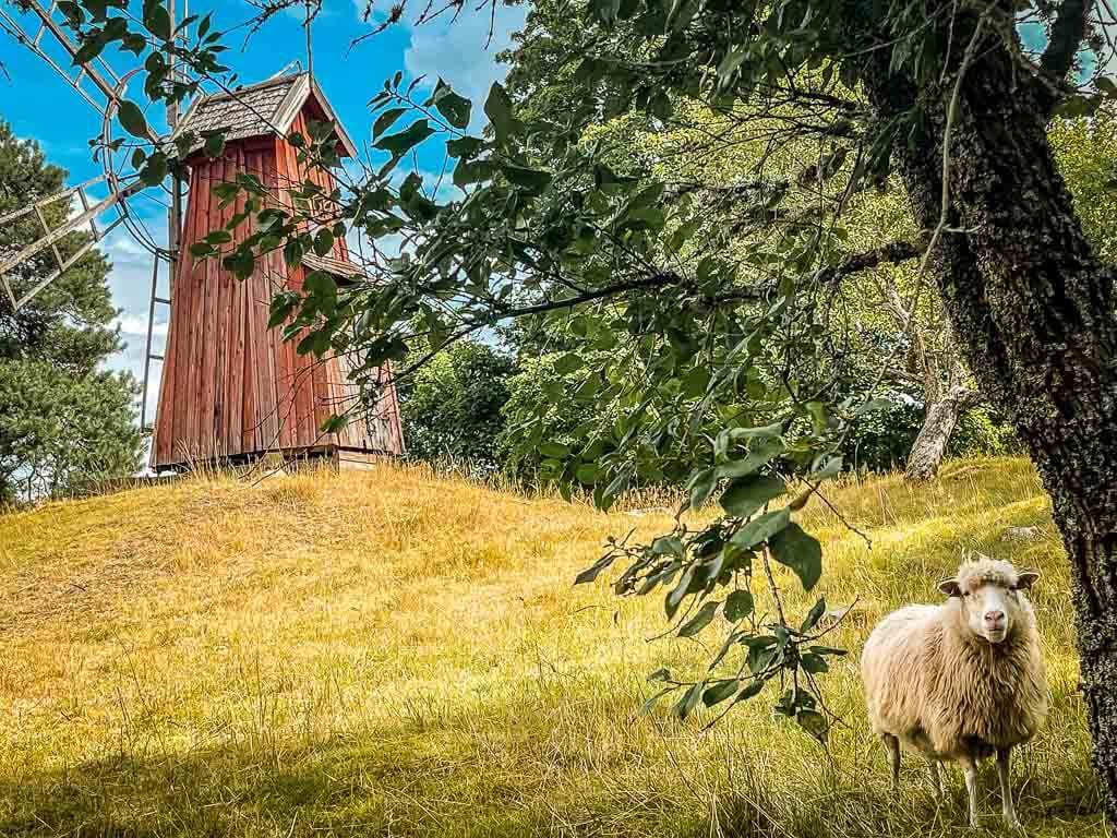 Uppsala Freilichtmuseum Disagarden mit Schaf und Windmühle