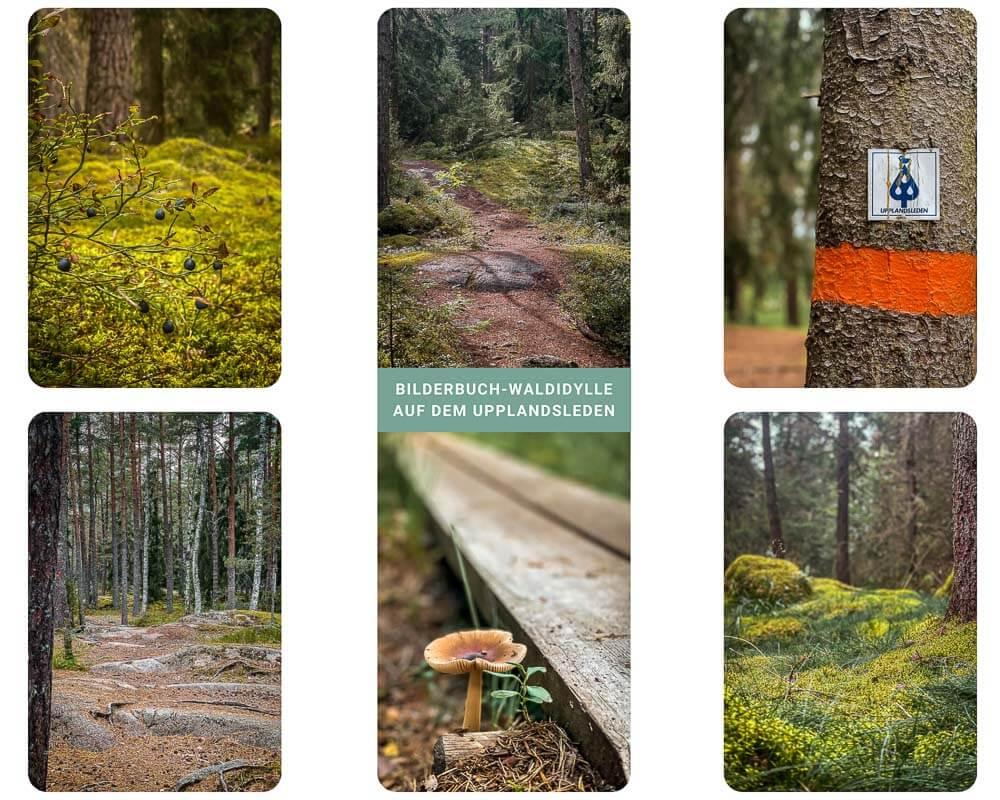 Wandern auf dem Upplandsleden von Sunnersta nach Nyby