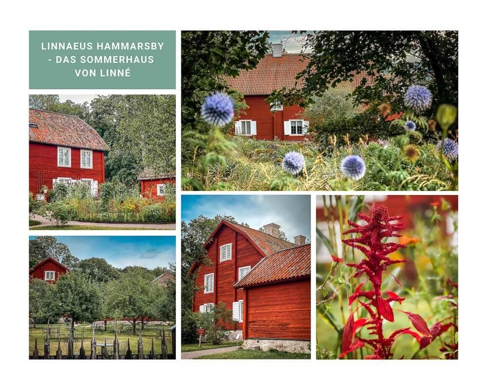 Linnaeus Hammarsby mit Garten in Uppsala