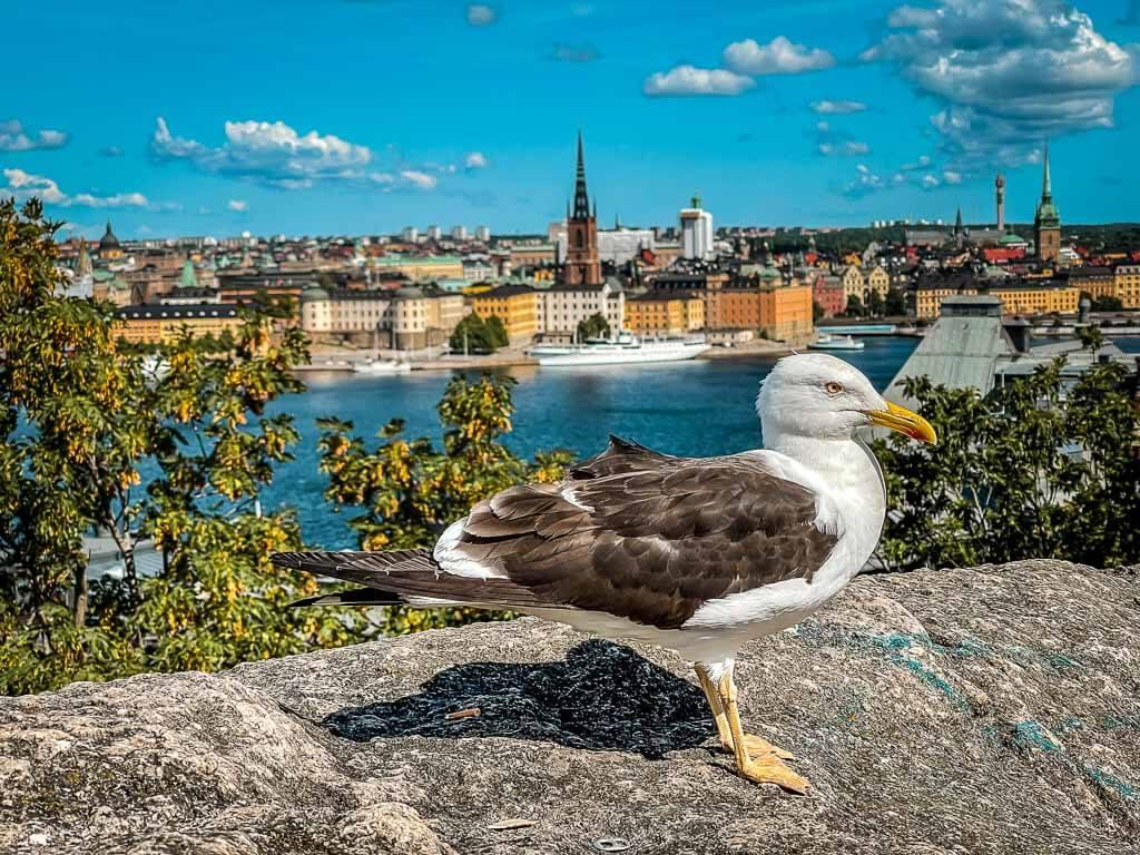 Möwe in Stockholm aus Aussichtspunkt Skinnarviksberget